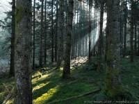 Lumière filtrée par les épicéas : Sony HX5V, 1/40, f/3.5, iso 400 : percée lumineuse en sous bois